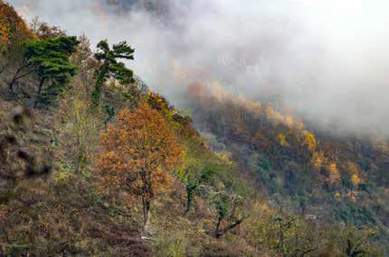 Verbuschung der Weinberge an den steilen Terrassenhängen. (Foto: Piel media)