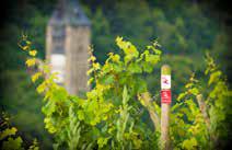 Burgen, Wandern und Wein ziehen Gäste an den Oberen Mittelrhein. (Foto: Piel media)